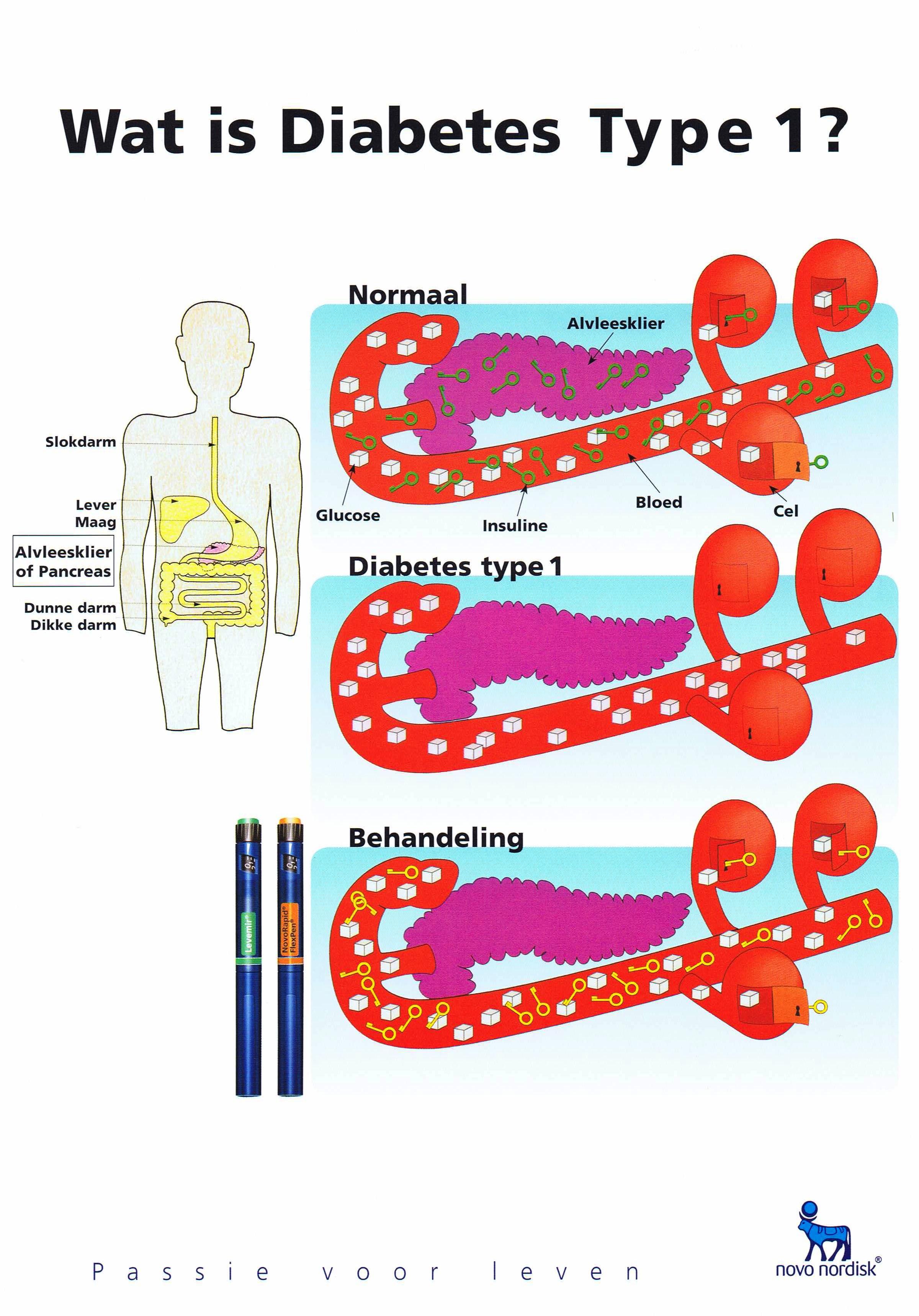 werking van de alvleesklier